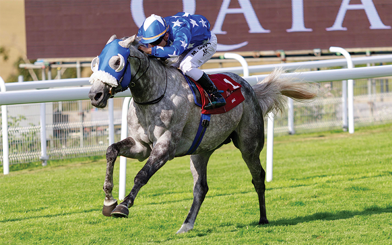 Quality horses entered in Qatar Arabian World Cup